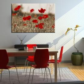 Maki - obraz na ścianę nr 2291