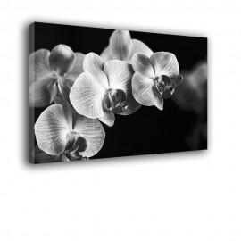 Czarny storczyk - obraz nowoczesny kwiaty nr 2293