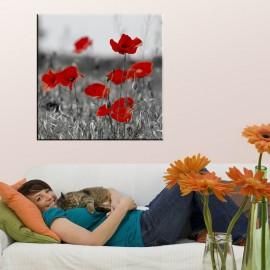 Czarno biała łąka maków z czerwonymi płatkami - obraz na ścianę nr 2321