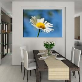 Stokrotka - obraz na ścianę nr 2328