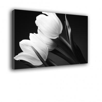 Tulipany czarno białe - obraz nowoczesny kwiaty nr 2028