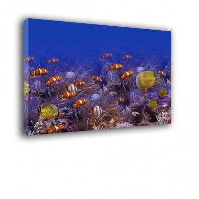 Ryby morskie tropikalne - obraz na płótnie nr 2348