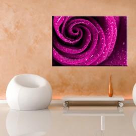 Pąk róży - obraz nowoczesny kwiaty nr 2031