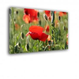 Trawa i kwiaty maków - obraz na płótnie nr 2363