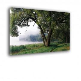 Drzewo nad zamglonym jeziorem - obraz na płótnie nr 2368
