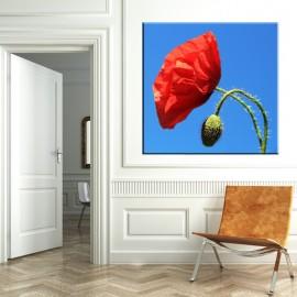 Samotny mak - obraz na ścianę nr 2370