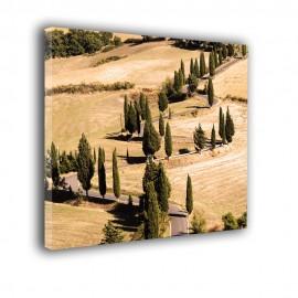 Krajobraz drzewa przy drodze - obraz na płótnie nr 2372