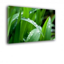 Zielona trawa - obraz na ścianę nr 2375