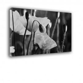Białe maki - obraz na płótnie nr 2380