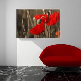 Maki - obraz nowoczesny kwiaty nr 2033
