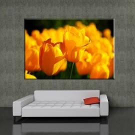 Tulipany żółte - obraz nowoczesny kwiaty nr 2034