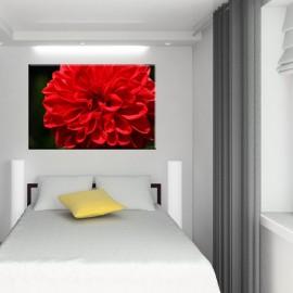 Czerwony kwiat dalia - obraz nowoczesny nr 2400