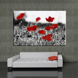 Pole maków - obraz nowoczesny kwiaty nr 2035