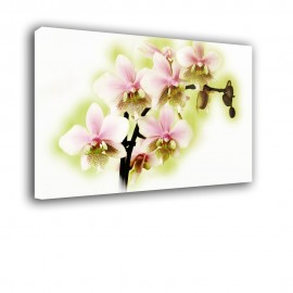 Zielona orchidea - obraz nowoczesny nr 2404