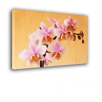 Łososiowa orchidea - obraz nowoczesny kwiaty nr 2412