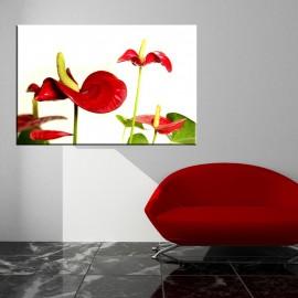Kwiaty Anturium - obraz nowoczesny nr 2413