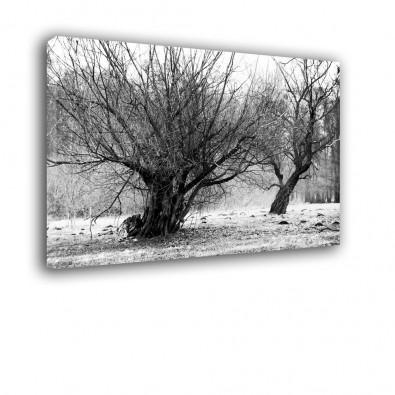 Stare drzewo - czarno biały obraz nowoczesny nr 2424