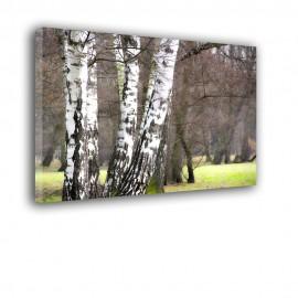 Przednówek z brzozami - obraz nowoczesny nr 2425
