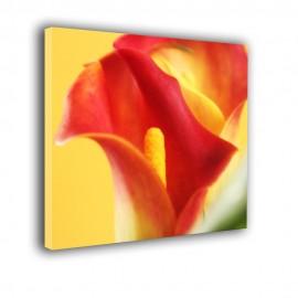 Czerwona kalia - obraz nowoczesny kwiaty nr 2428