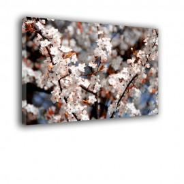 Kwitnące drzewo - obraz na płótnie nr 2457