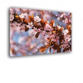 Gałązka kwiat wiśni - obraz nowoczesny nr 2459