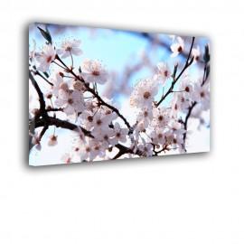 Wiosenne kwiaty - obraz na płótnie nr 2465