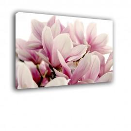 Magnolie - obraz na ścianę nr 2474