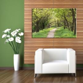 Ścieżka między drzewami - obraz na ścianę nr 2498