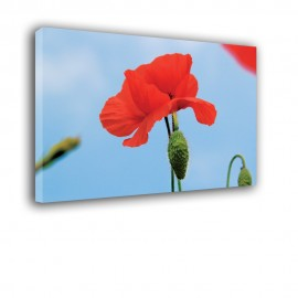 Mak na niebie - obraz nowoczesny kwiaty nr 2519