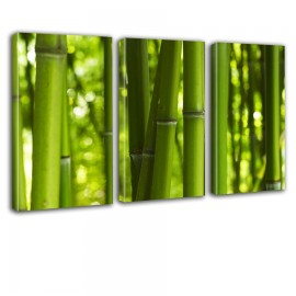 Bambusy - obraz na płótnie tryptyk nr 2638