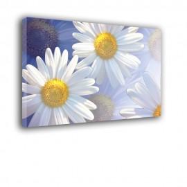 Margerytki - obraz nowczesny kwiaty nr 2523