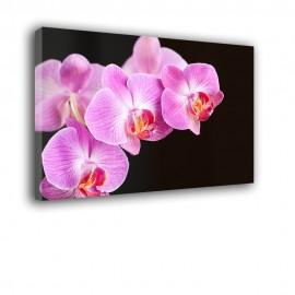 Orchidea na czarnym tle - obraz nowoczesny kwiaty nr 2066