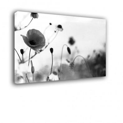 Maki czarno białe - obraz na ścianę do sypialni nr 2012