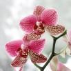 Orchidea - obraz nowoczesny kwiaty nr 2043