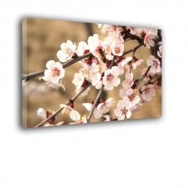 Kwiaty jabłoni - obraz na ścianę nr 2084