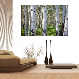 Las brzozowy - obraz nowoczesny drzewa nr 2126