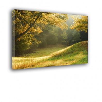 Leśna polana - obraz na ścianę nr 2127