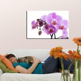 Orchidea - obraz nowoczesny kwiaty nr 2009