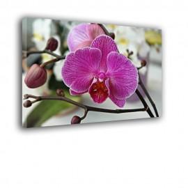 Stroczyk - obraz nowoczesny - kwiaty nr 2173